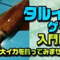 タルイカゲーム基礎講座【巨大イカをゲットしてみませんか?】