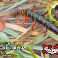 ジャッカルから加藤誠司プロデュース「シザード7inch」登場!多数の微波動を出す稚魚の集合体をシザーコームの腕とNEWリザードで表現