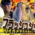 【SLJ爆釣動画】スーパーライトジギングで怒涛のラッシュ