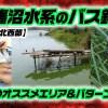 印旛沼水系のバス釣り!真夏のオススメエリア&パターンを紹介【寄稿by糟谷文重】