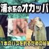11月の霞ケ浦水系のオカッパリで確実に1本のバスを釣るための秘策とは?【寄稿by横川隼大】