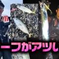 サーフがアツい!ワカシ&タチウオの季節到来!【寄稿by井熊亮】