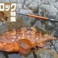 【必見!】グルーパー(ハタ系)狙いの超オススメ・タックルセレクト【西野式グルーパー攻略法】