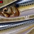 【インパクト大】コノシロや落ち鮎パターンに効果絶大なメガバス「全長220mm130g」のSWプラグとは?
