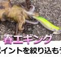 【春エギング】餌木蔵のワンポイント「二極化するシャローかディープかを絞り込むべし」