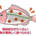 【美味しい魚をもっと美味しく!】ひと手間で変わる!「神経絞め」の全てとオススメアイテムを紹介