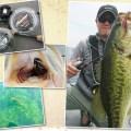 夏の琵琶湖は落として釣る!ウィード攻略のキーとなる3つのパターンとは