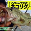 遠賀川オカッパリ、「サンカクティーサンのネコリグ」を選ぶ理由
