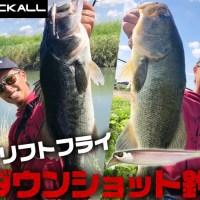 【小魚が多い時に激効き】加木屋守(マーモ)がジャッカル「RVドリフトフライ」のショートリーダーダウンショット釣法を紹介