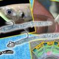 【独特な細長いパドルテールが魚を激寄せ】アクアウェーブのライトゲーム専用ワーム「フラップイール」を紹介