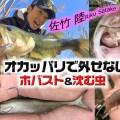 オカッパリバス釣りで外せない「ホバスト」と「沈む虫」攻めを紹介