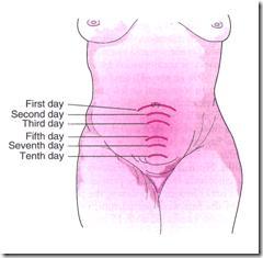 Involusi Uterus Darah Implantasi