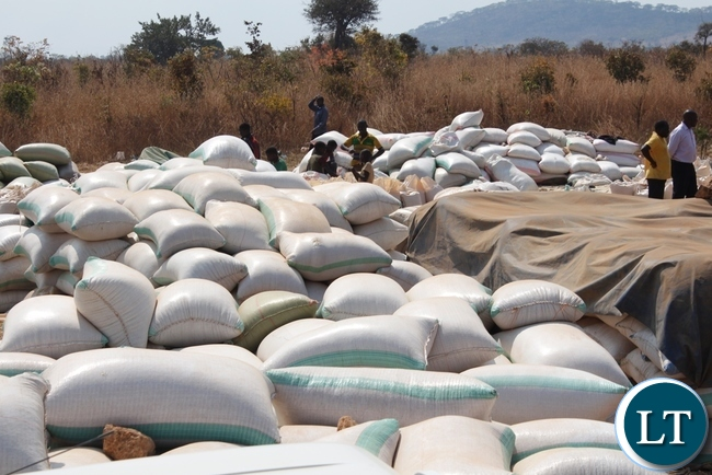 Heaps of maize yet to be rebadged for sale at Chipoka Satellite depot