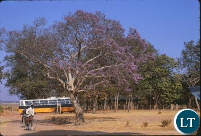 UBZ Bus