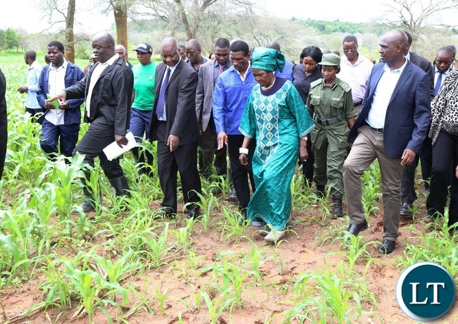 Vice President Mrs Inonge Mutukwa Wina flanked by Lusaka Province Minister Japhen Mwakalombe (r) during the tour of fields affected with Army worms in Chongwe District