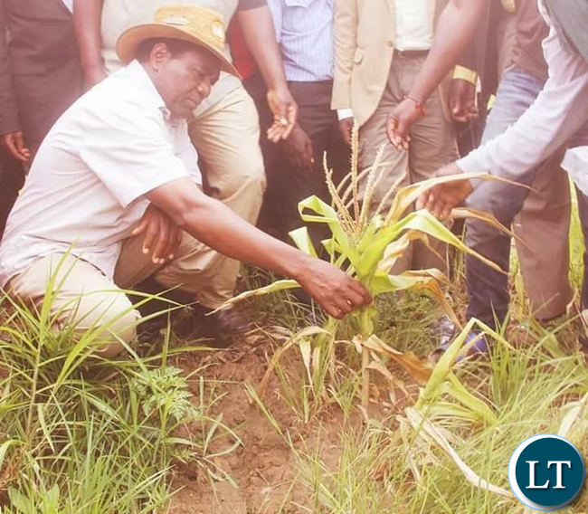 HH inspects the failed Maize crops in Southern Province