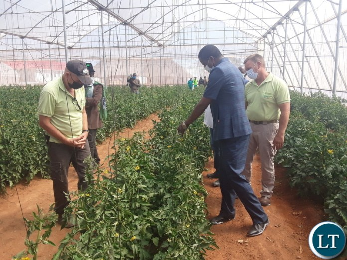 President Edgar Lungu admires tomato plants during the tour of Green 2000Agricultural Equipment and know how limited in Kawambwa District during his visit to the area. Picture by SUNDAY BWALYA/ ZANIS