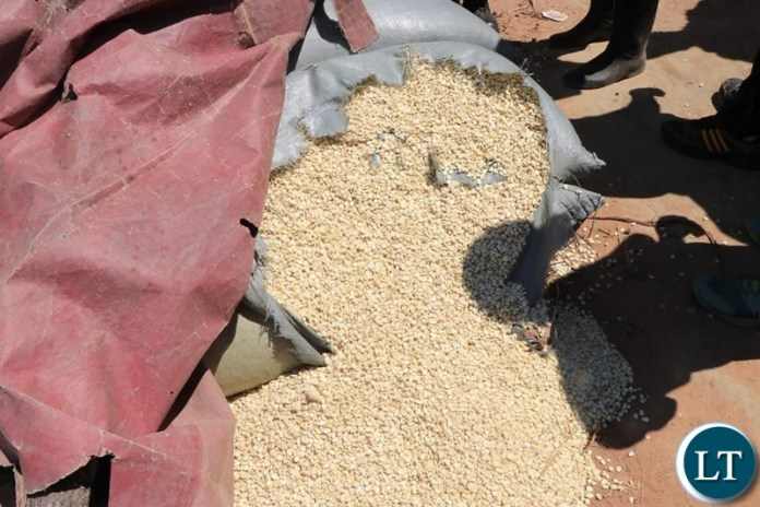 Maize Going to Waste