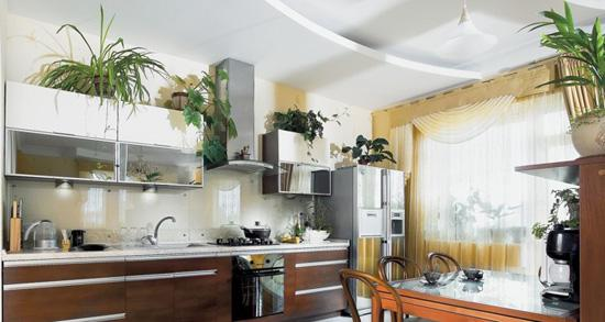 How To Decorate Kitchen With Green Indoor Plants And Save Money
