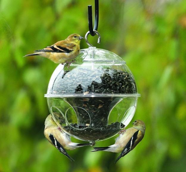 Modern Bird Feeders Attract Birds and Add Beautiful Yard ... on Birds Backyard Landscapes id=19884