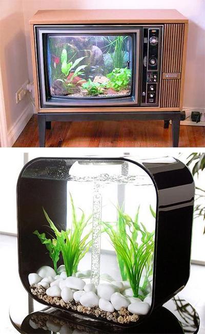 Small Outdoor Fish Tank