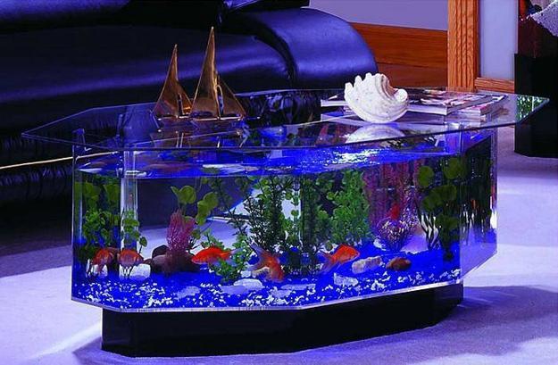 custom tropical fish tanks