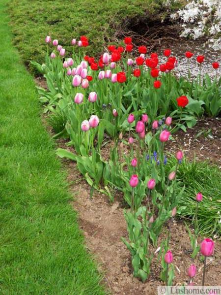 spring flower garden ideas 15 Spring Garden Design Ideas, Flower Beds and Evergreen