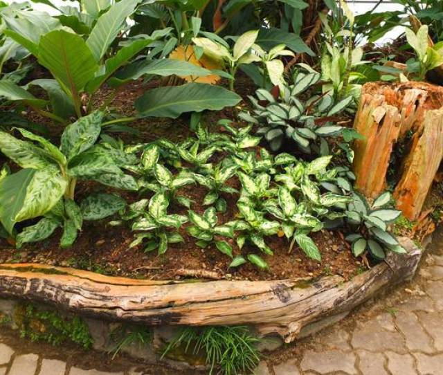 Raised Bed Wall Design Ideas Yard Landscaping
