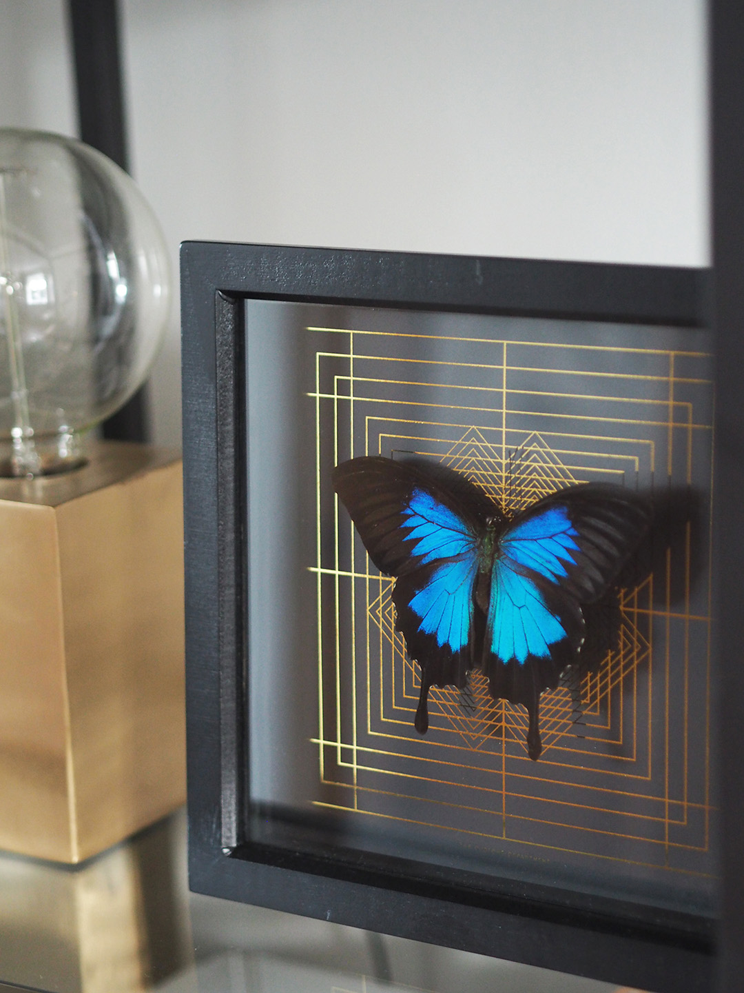 The Curious Department DECO SQUARE mounted Ulysses butterfly