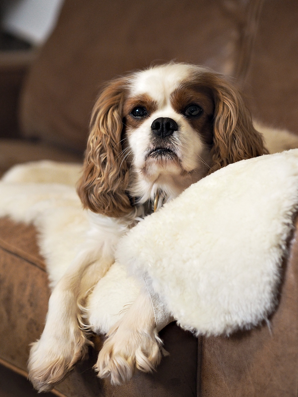 Sheepskin Pet Bed