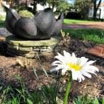 Shasta Daisy with Lotus Sundial