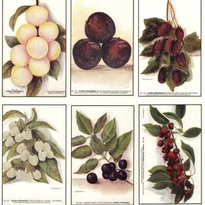 Reproduction Vintage Postcards