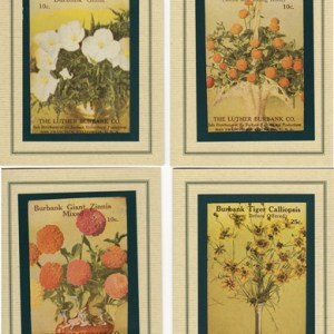 Seed Packet Cards