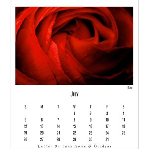 calendar page for July 2020 featuring an artistic close-up of a red rose