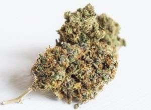 Photo of Luther Tackles Medical Pot Ordinance