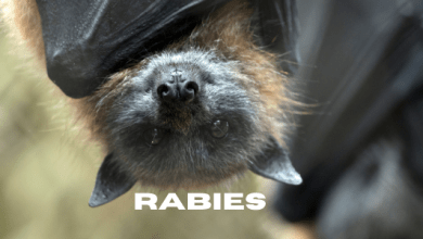 Photo of Rabies Detected in Bats at Bell Cow Lake