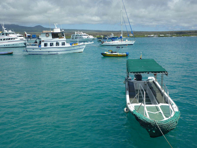 Discover the Grace of the Galapagos 1
