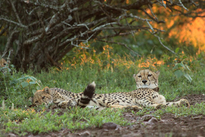 Rhino River Lodge An Exclusive African Escape 12