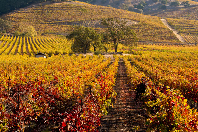 Top 5 Luxury Destinations in the USA Napa Valley 1