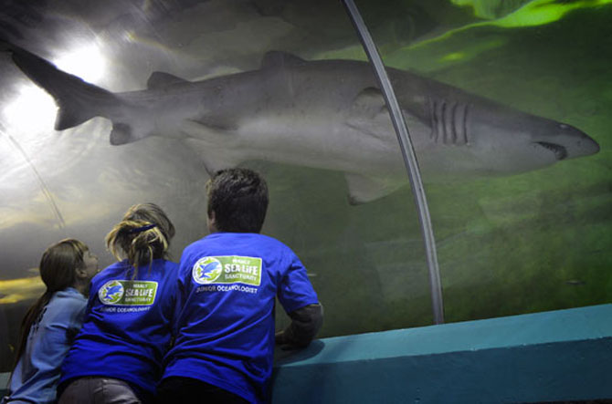 Top 7 Family Activities in Sydney Manly Sea Life Sanctuary