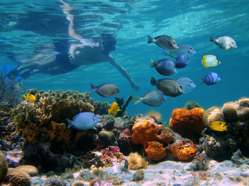 Bora Bora Activities Snorkeling 3