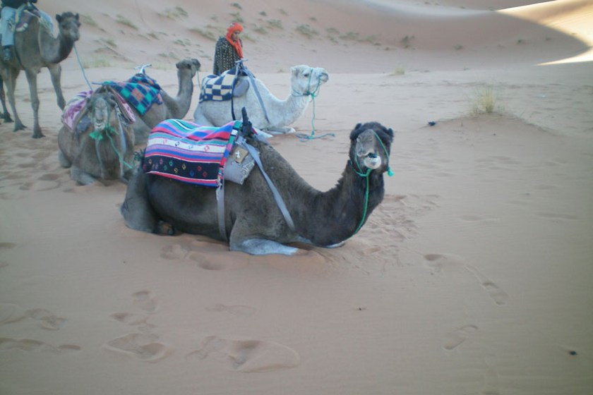 Camel Trek Across the Sahara Desert 3