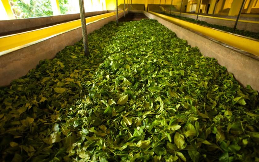 Explore tea trails Sri Lanka 2
