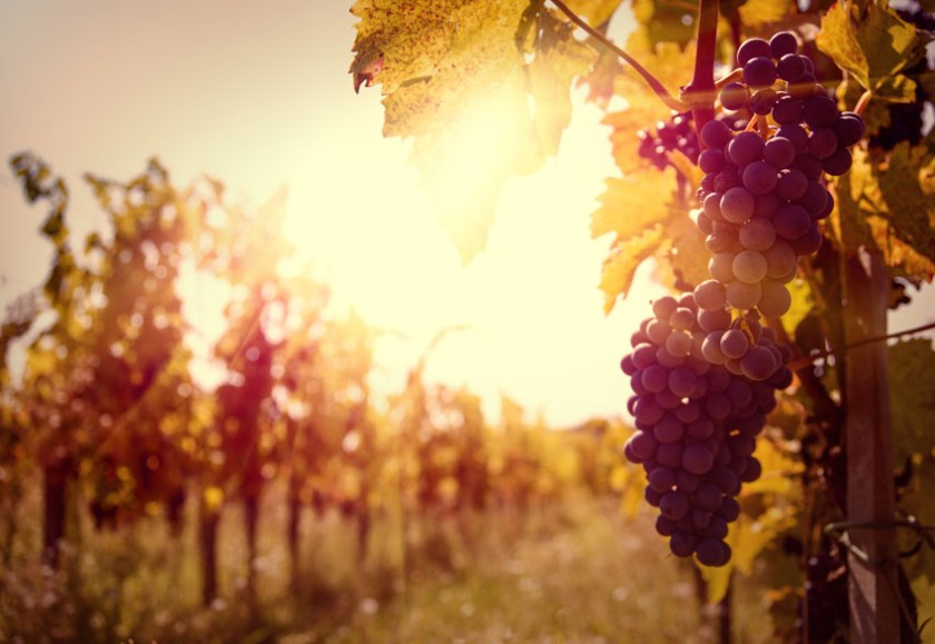 New Zealand Wine and Dine Escapes Vineyards of Marlborough