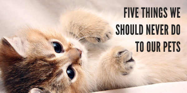 pet caring guide