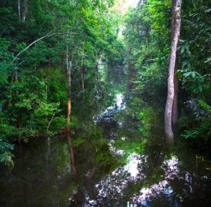 14 claudia Jaguaribeigarapé  do Rio Negro