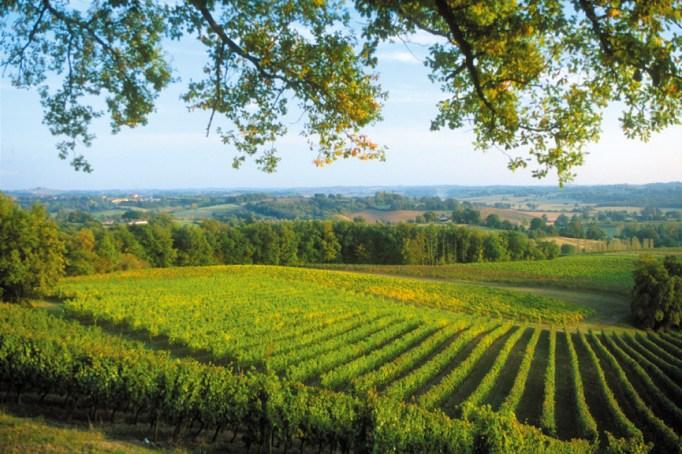 Vignes et paysage de Sabazan.
