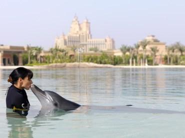 D9-nager-avec-dauphins
