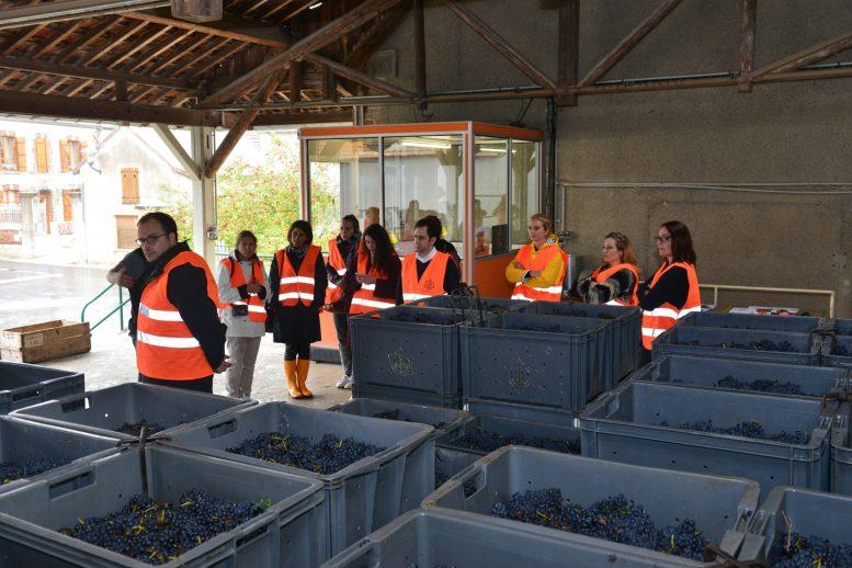 Vendanges Veuve Clicquot - photo Michel Jolyot (286)