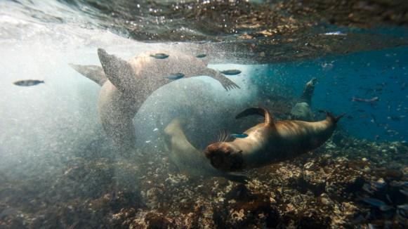 Pacific Ocean, Floreana Island, Galapagos Islands National Park, Ecuador.